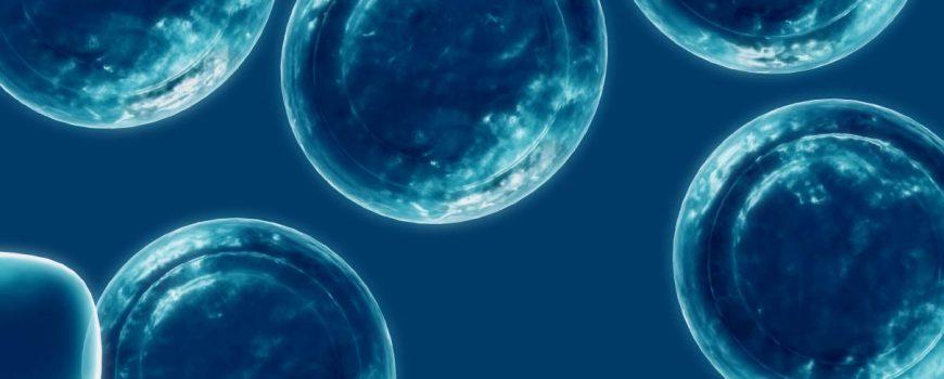 celulas-madre-1
